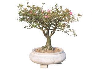 Создание штамбовой формы кустарников и деревьев.