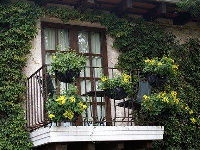 Декоративные кустарники у дома.