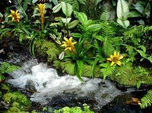 Тропический ручей