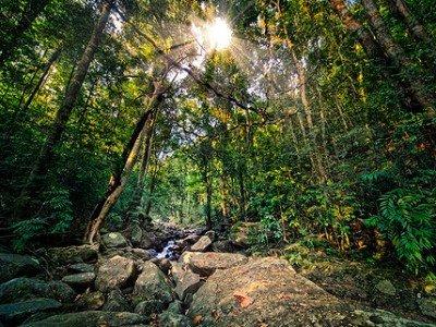 Растения тропического пояса.