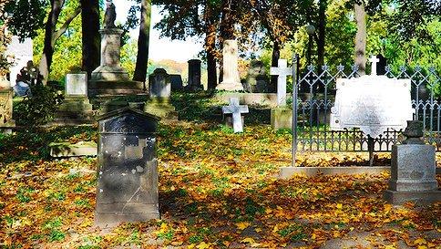 Какие растения посадить на кладбище