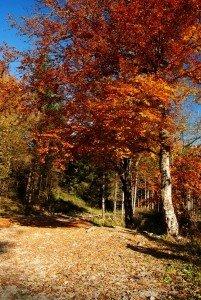 Красочные ландшафтные композиции