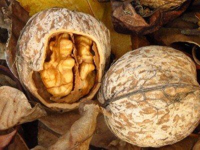 Грецкий орех польза и вред.