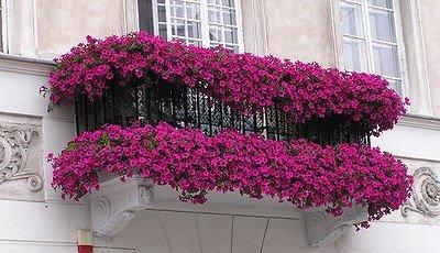 Цветы для подвесных кашпо.